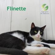 Flinette