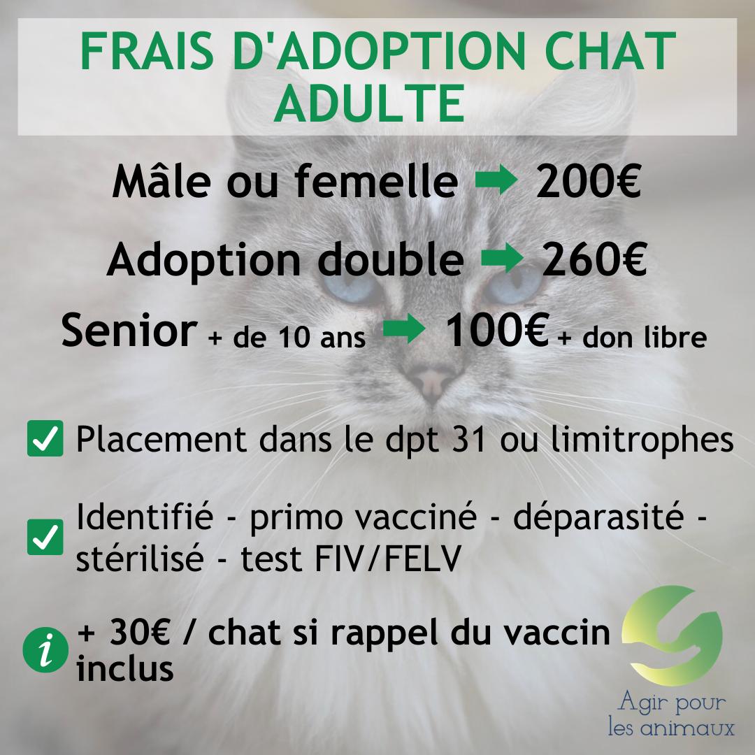 Frais adoption chat corrige