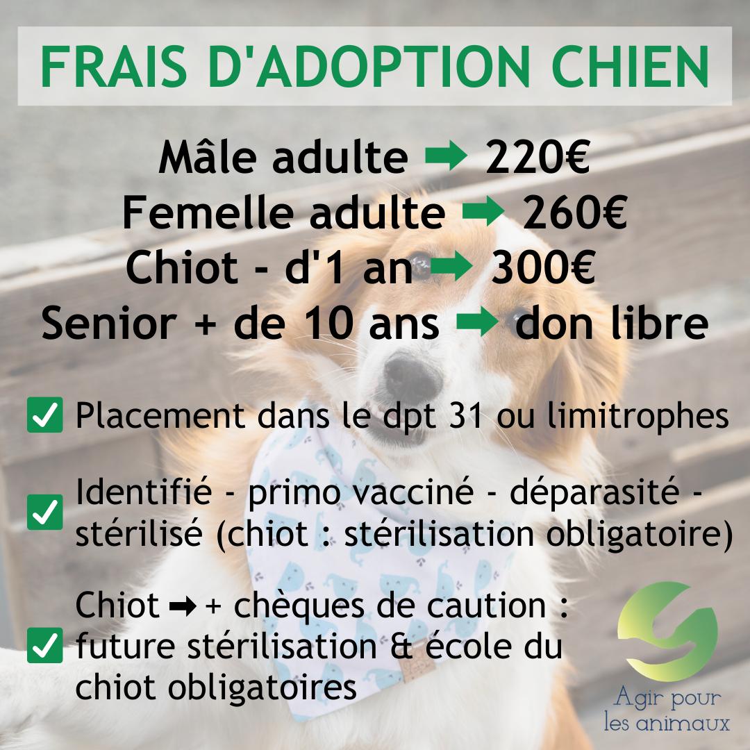 Frais d adoption chiens