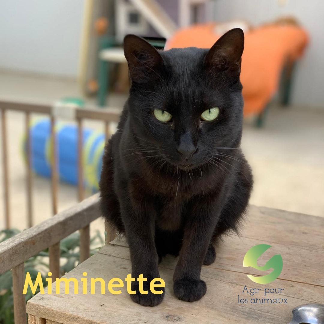 Miminette